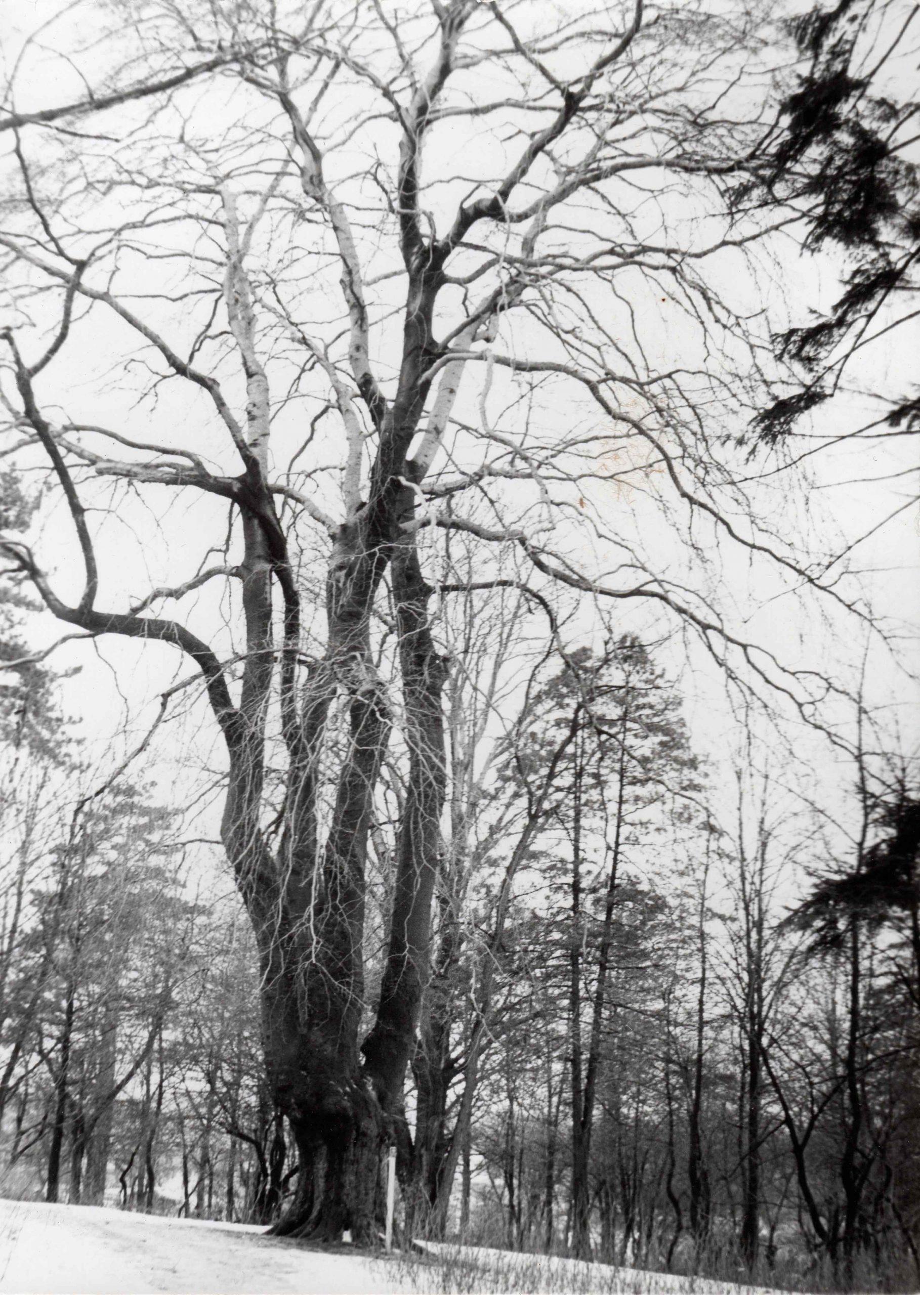 Ewidencja żarowskiego założenia ogrodowo-parkowego 1987 (12)
