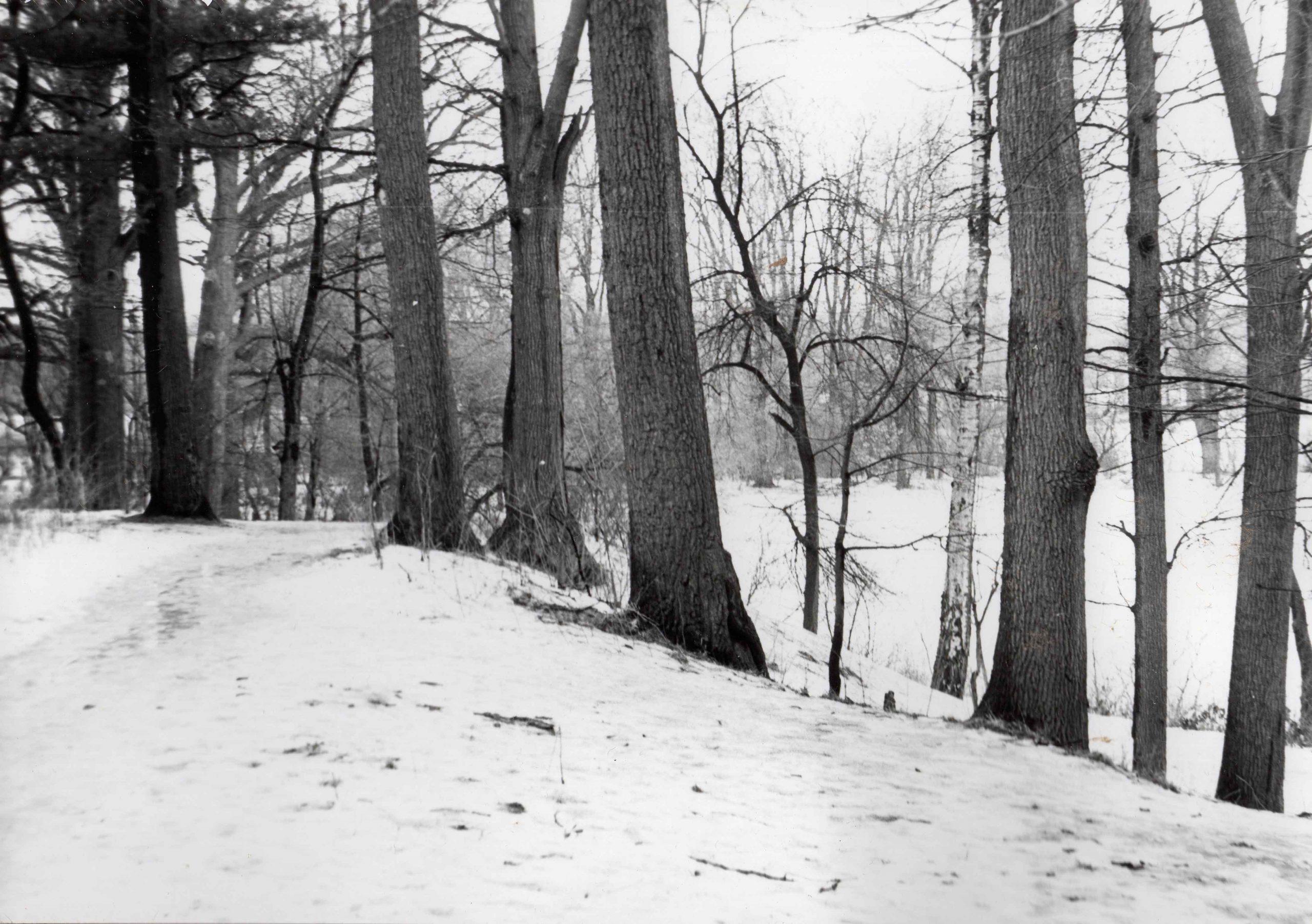 Ewidencja żarowskiego założenia ogrodowo-parkowego 1987 (13)