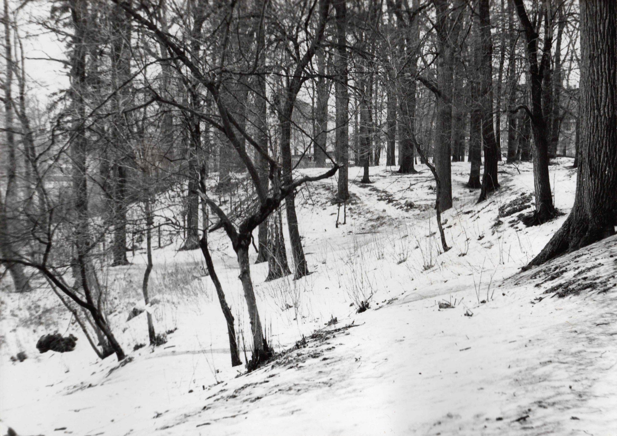 Ewidencja żarowskiego założenia ogrodowo-parkowego 1987 (14)