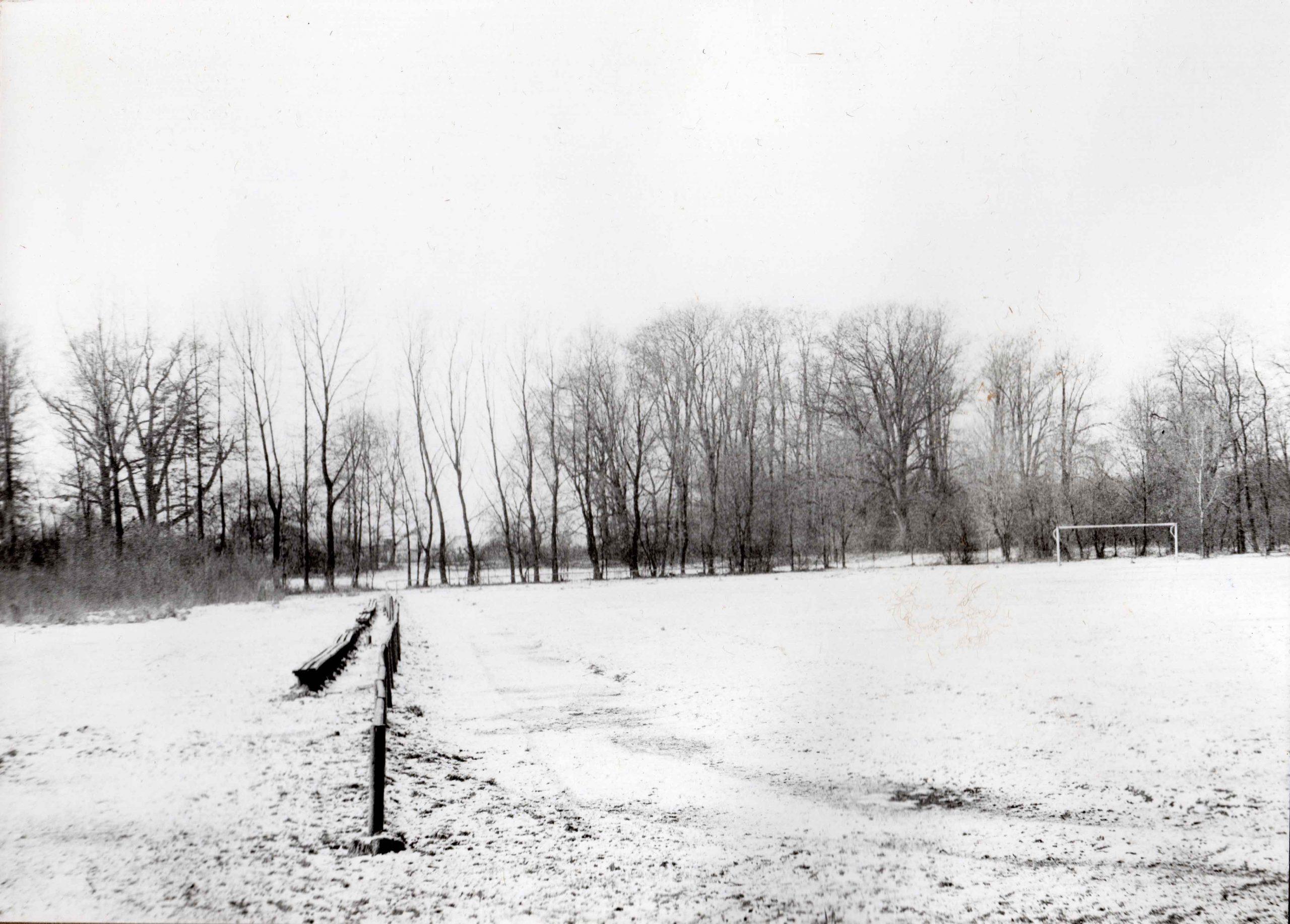 Ewidencja żarowskiego założenia ogrodowo-parkowego 1987 (19)