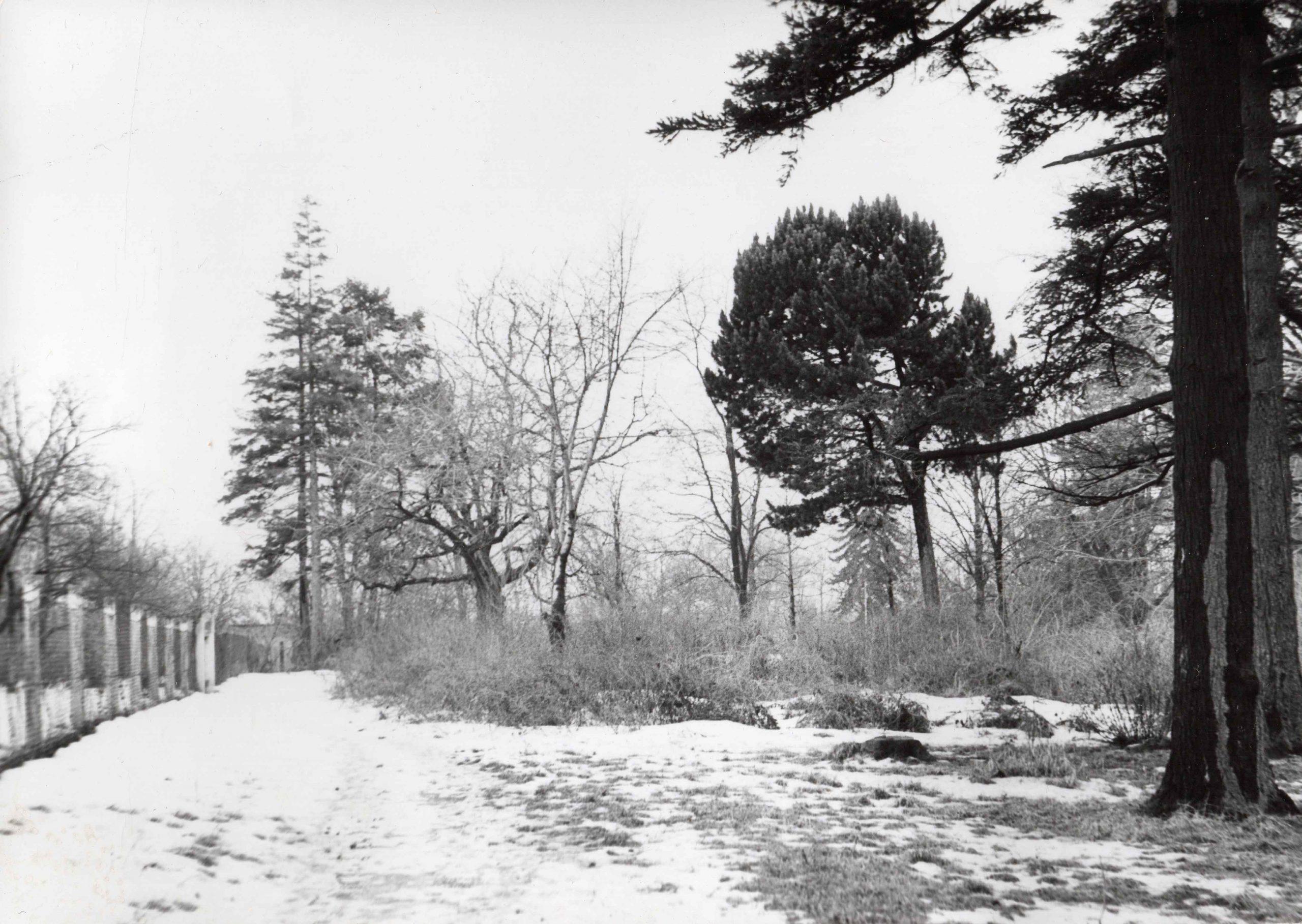 Ewidencja żarowskiego założenia ogrodowo-parkowego 1987 (2)