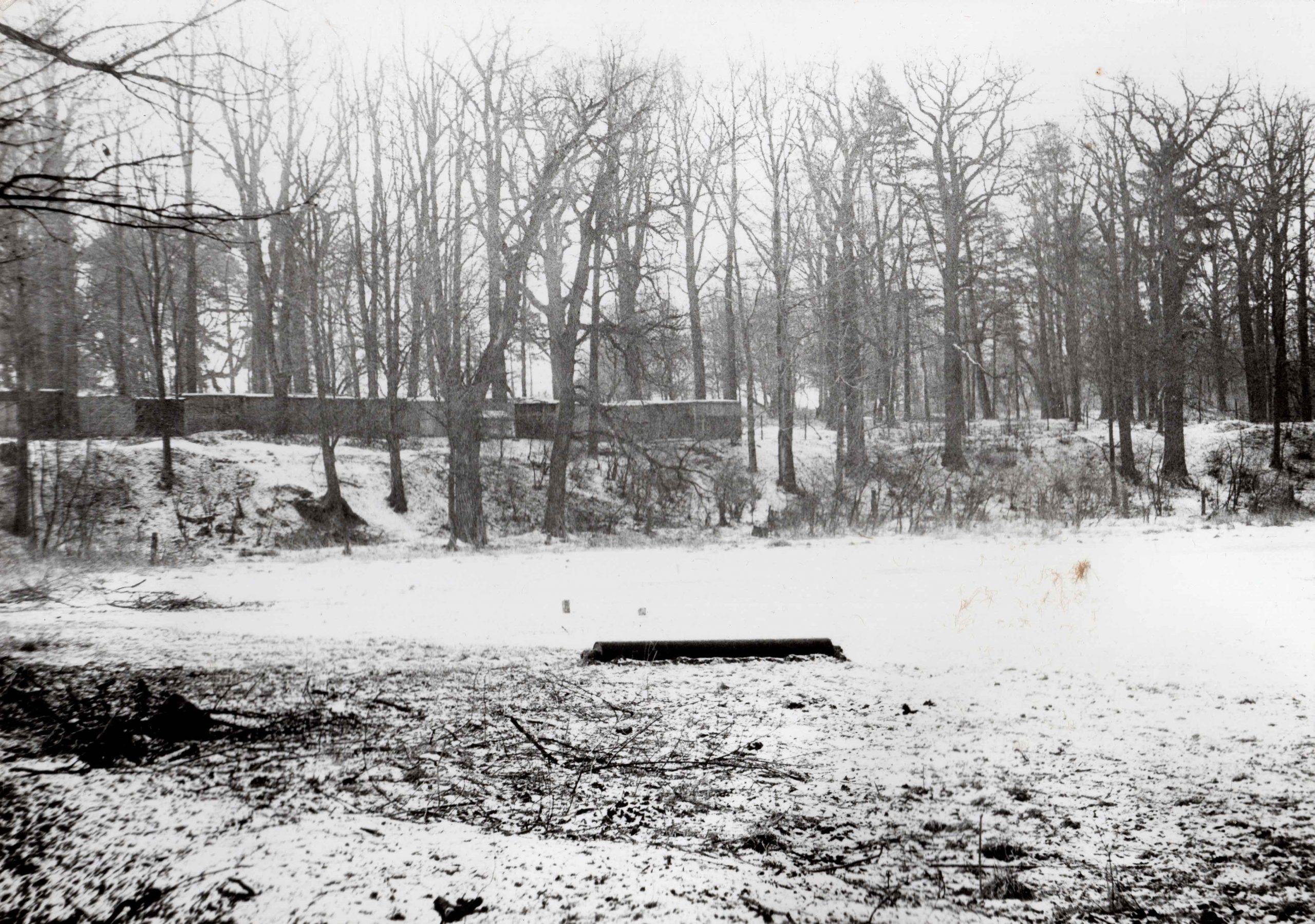 Ewidencja żarowskiego założenia ogrodowo-parkowego 1987 (20)