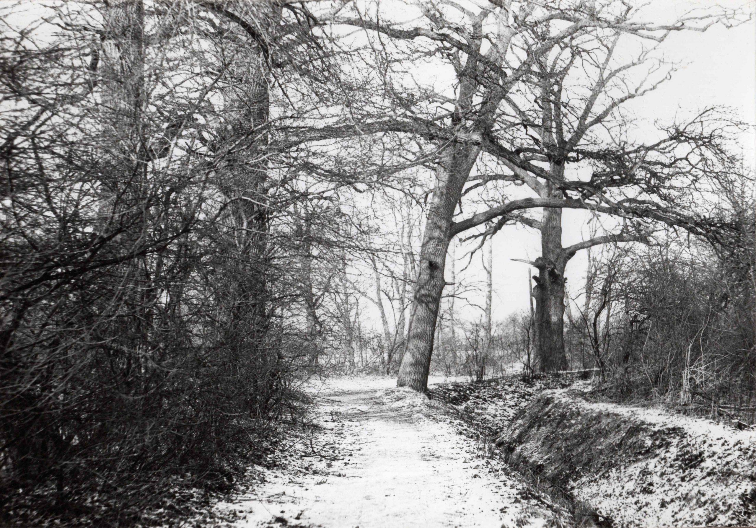 Ewidencja żarowskiego założenia ogrodowo-parkowego 1987 (22)