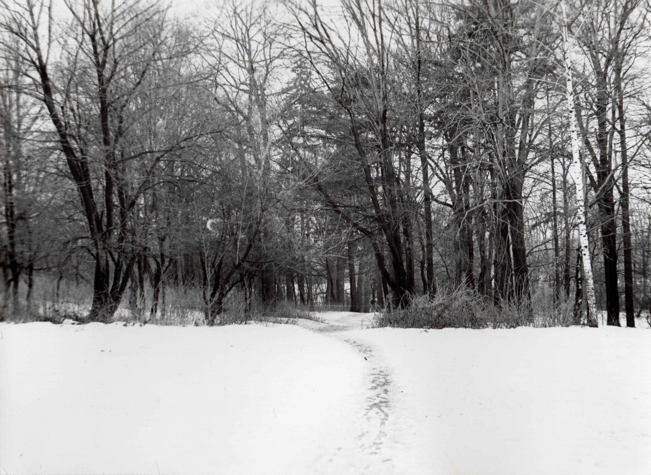 Ewidencja żarowskiego założenia ogrodowo-parkowego 1987 (5)