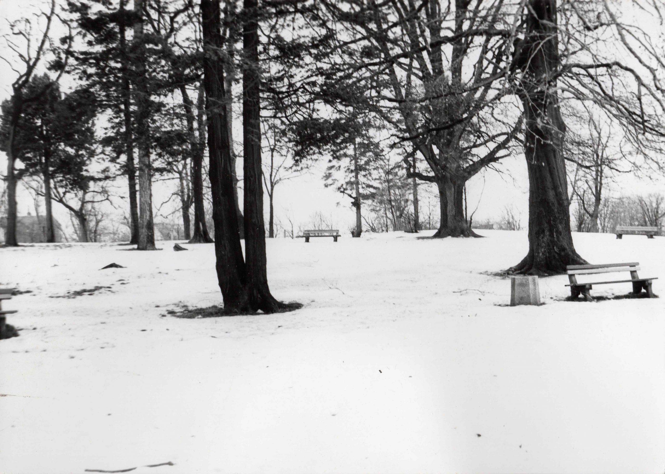 Ewidencja żarowskiego założenia ogrodowo-parkowego 1987 (6)