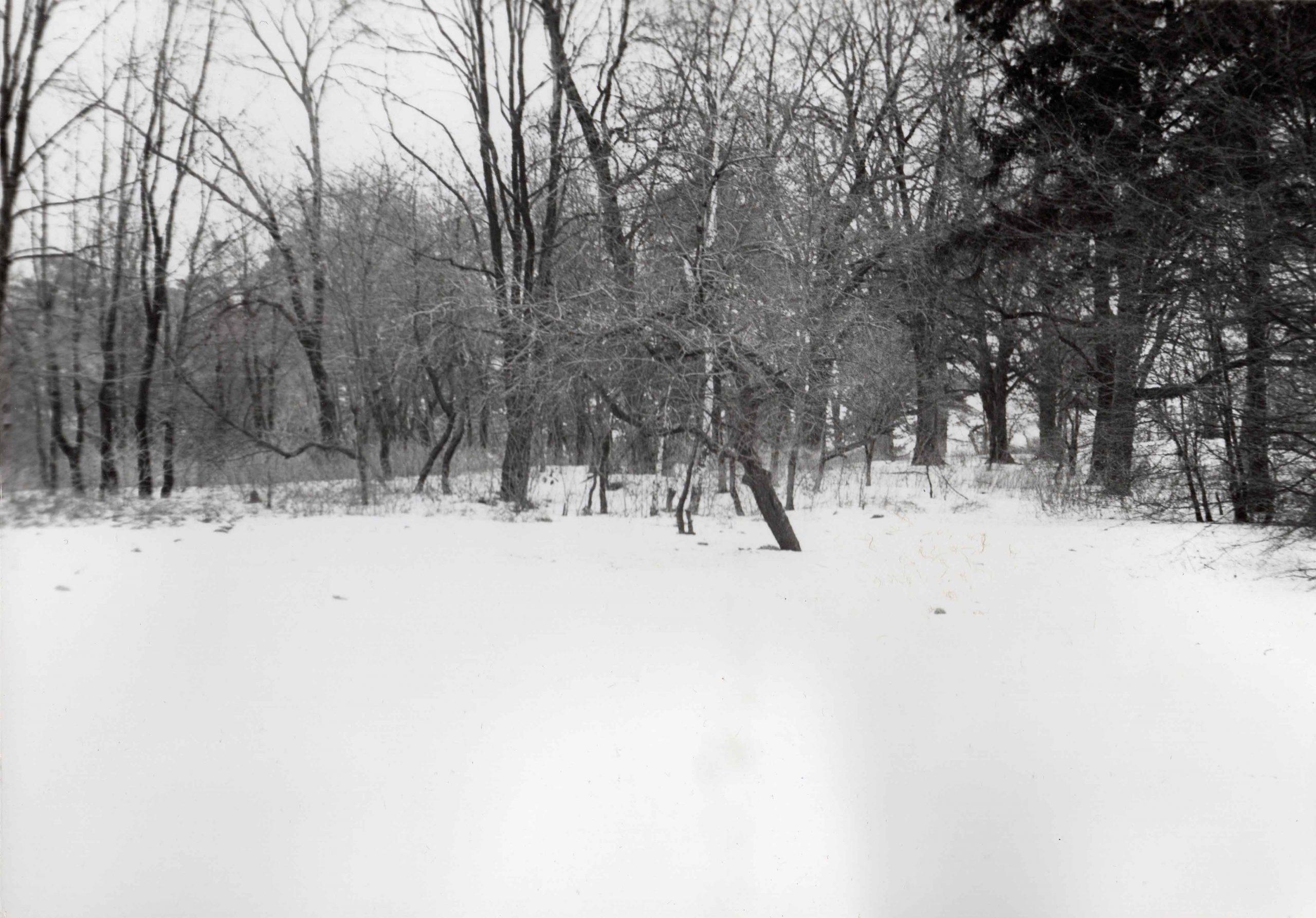 Ewidencja żarowskiego założenia ogrodowo-parkowego 1987 (9)