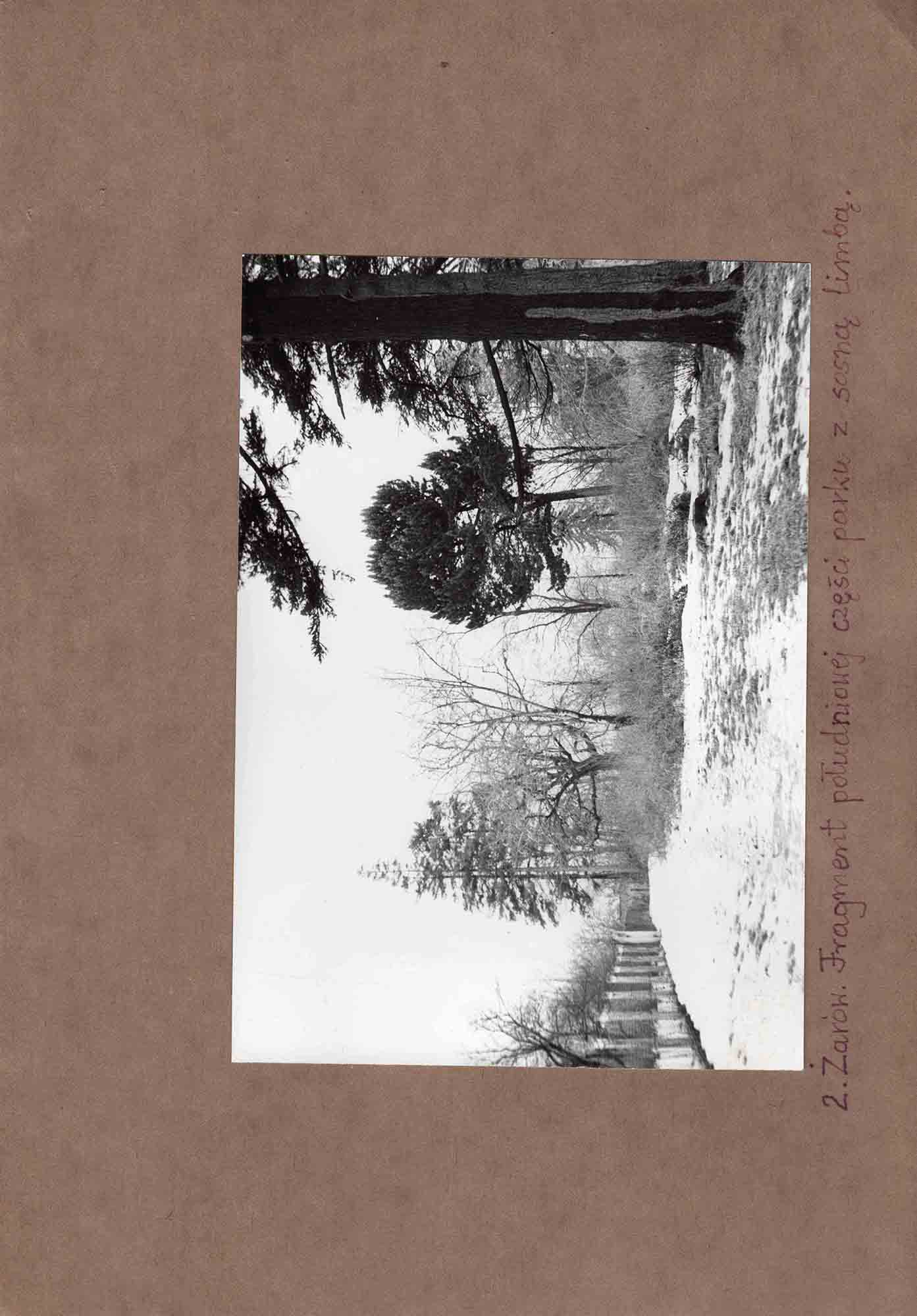 Ewidencja założenia ogrodowo-parkowego 1987 dokument (16)