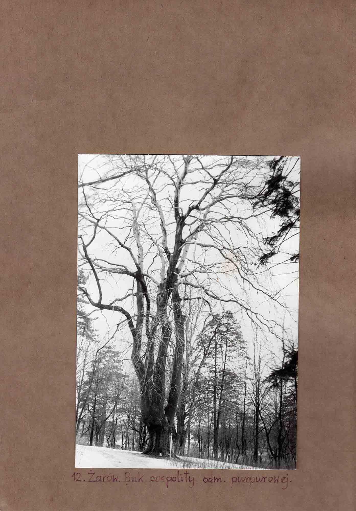 Ewidencja założenia ogrodowo-parkowego 1987 dokument (26)