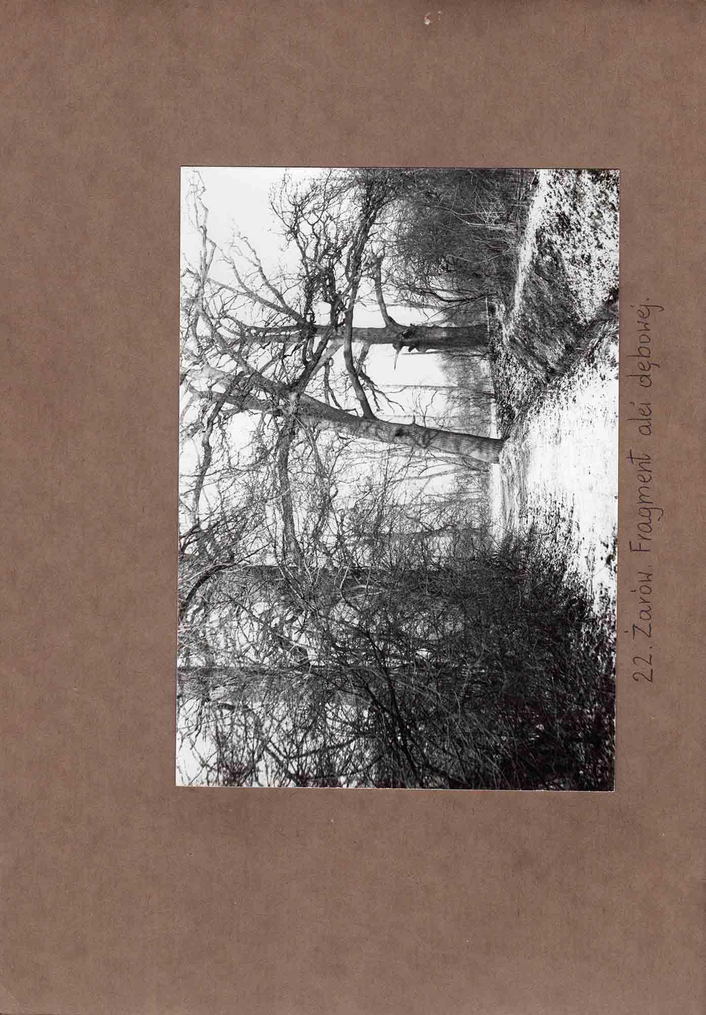 Ewidencja założenia ogrodowo-parkowego 1987 dokument (36)